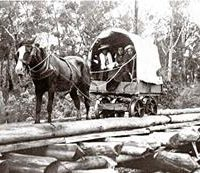 Collins Family Wagon On The Way Into Longwarry 1898