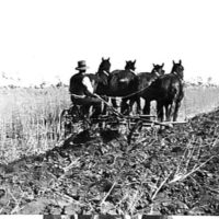 Ploughing At Mr A Wakenshaws Farm Modella 1929